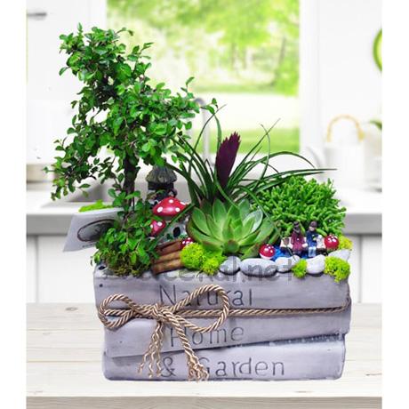 Mini Bahçe Kitap Teraryum
