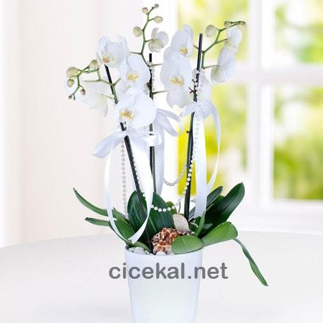 Seramikde 3 Dallı Orkide