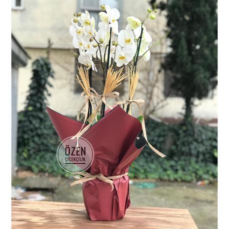 3 Dallı Başaklı Beyaz Orkide