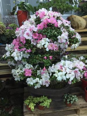 bağlarbaşı çiçekçi