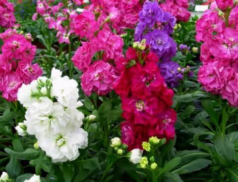 dragos çiçekçi