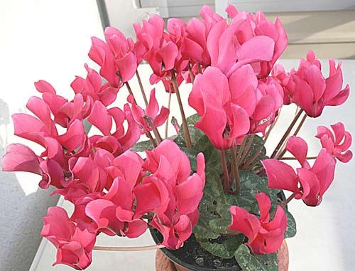 erenköy çiçekçi