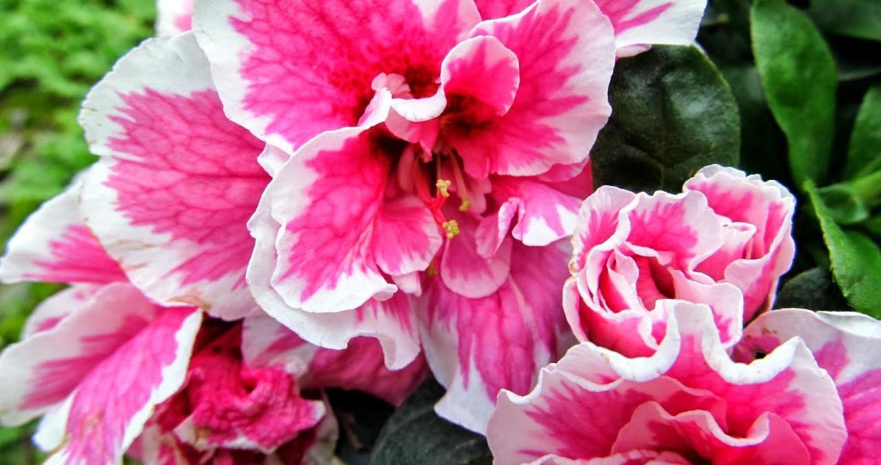 Sonbahar Kış Hangi Çiçekler Açar
