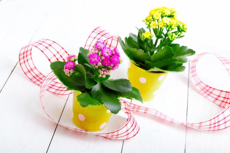 Bakımı En Kolay Saksı Çiçekleri