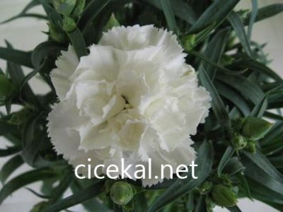 kaynarca çiçekçi