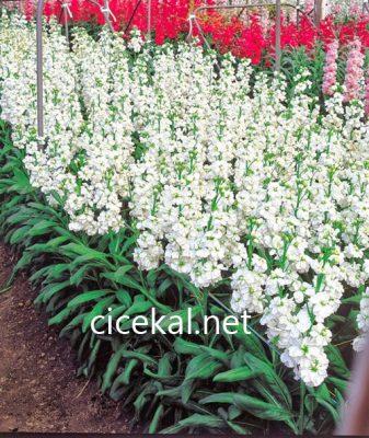 kayışdağı çiçekçi