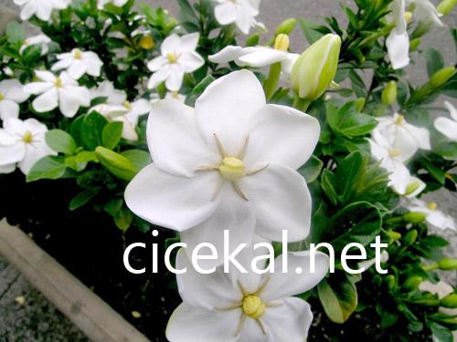 kurtköy çiçekçi