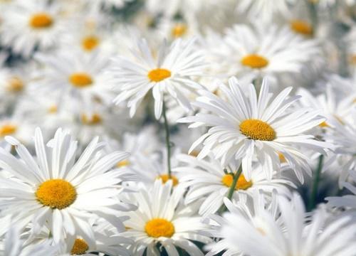 feneryolu çiçekçi