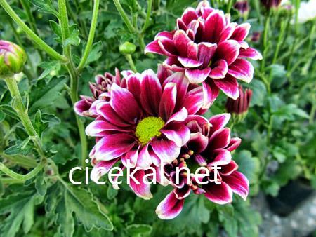 kartal çiçekçi
