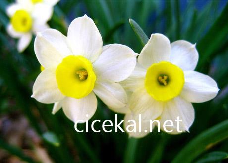 kızıltoprak çiçekçi