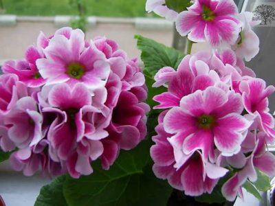 fenerbahçe çiçekçi