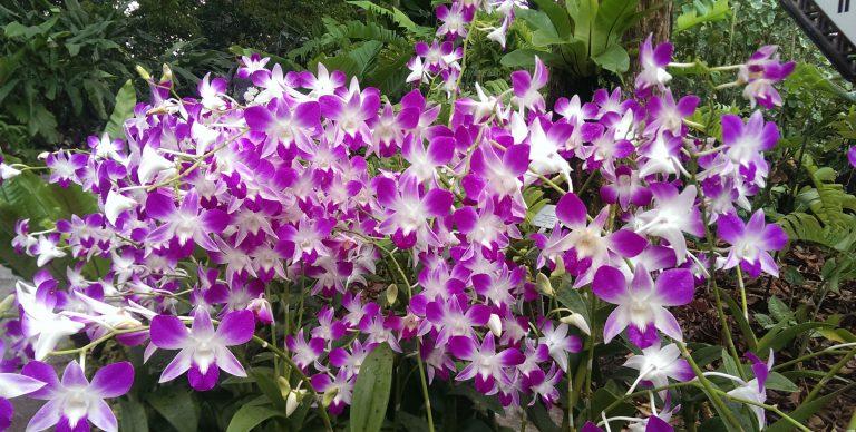 Orkide Çiçeğinin Anlamı Nedir ?