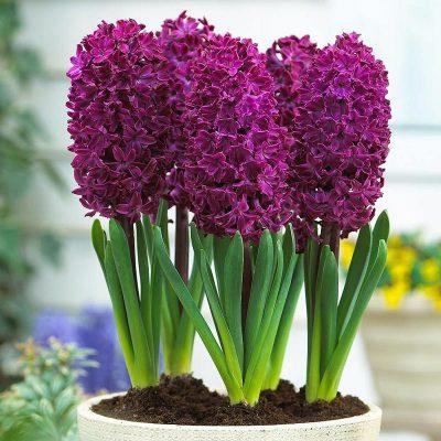 idealtepe çiçekçi