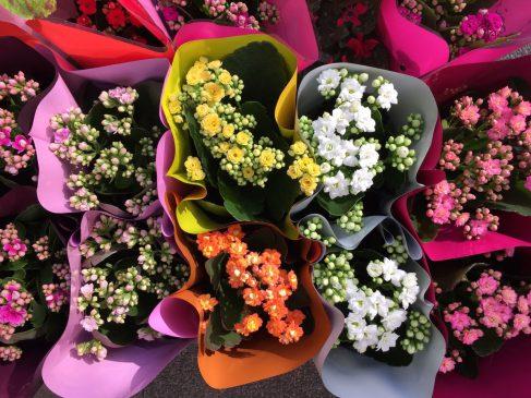 Dudullu Çiçekçi