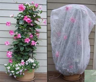 Kışın Çiçek Donması Nasıl Önlenir?