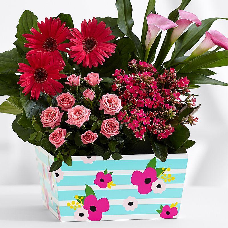 Saksı Çiçekleri Neden Çiçek Açmaz?