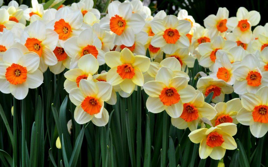 Fulya Çiçeği Bakımı
