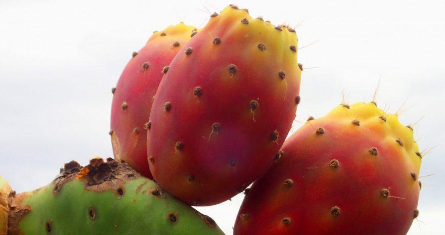 Kaynana Dili Çiçeği Bakımı