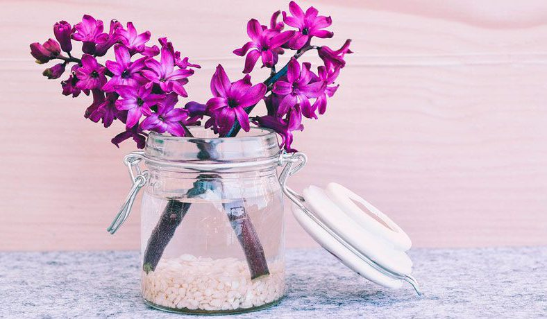 Vazo Çiçekleri Bakımı