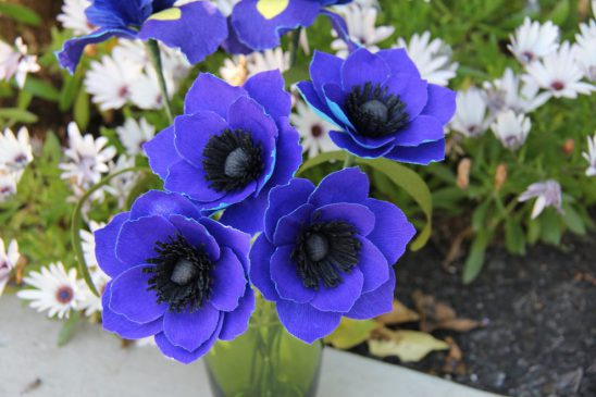 Anemon Çiçeği Anlamı
