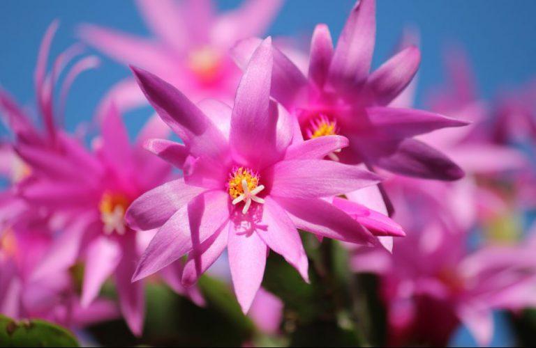 Güneş İstemeyen Çiçekler