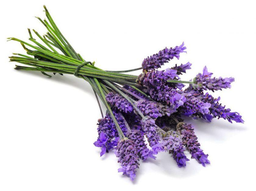 Lavanta Çiçeği Anlamı