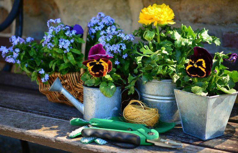 Çok Yıllık Bahçe Çiçekleri
