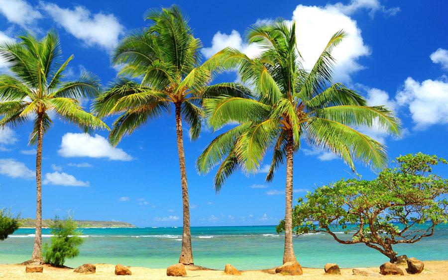 Palmiye Ağacı Bakımı