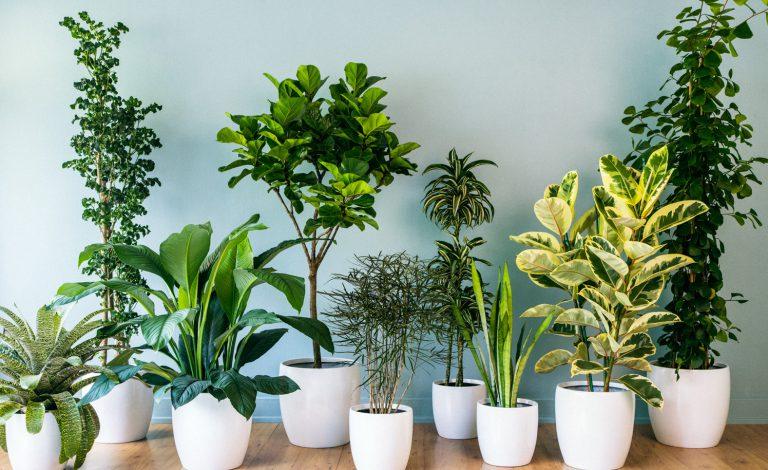 Uğurlu Bitkiler Nelerdir?