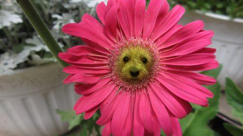 Yeni İşe Hangi Çiçek Gönderilir