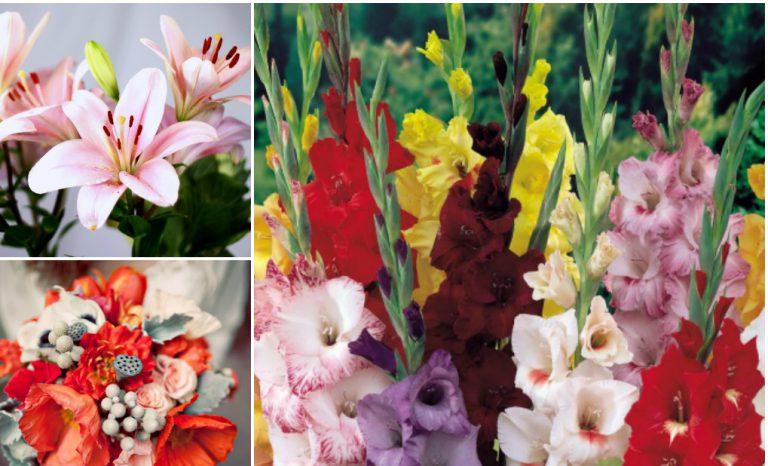 Zehirsiz Ev Çiçekleri
